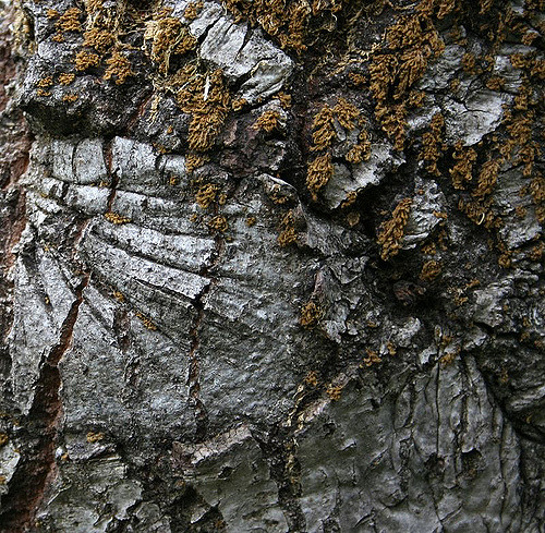 Tree bark and moss texture