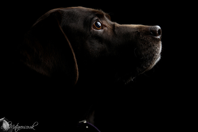 Low key photo of a dog shot in JPEG format then minor edits applied