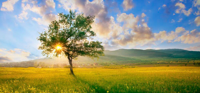 Sun shining through the leaves of a lone tree in a field, natural looking HDR image